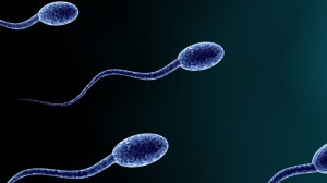 How Sperm Volume Increase Pills Work
